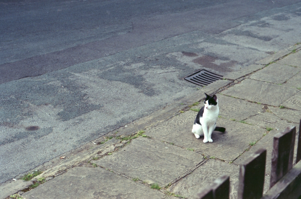134/366 - Archie cat. He lives a few streets down but hes often snooping around or just looking cute.