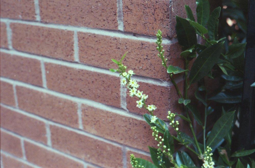 238/366 - Tiny flowers