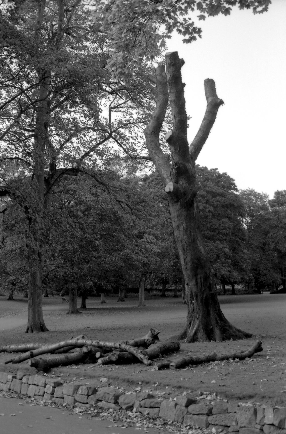 298/366 - A chopped tree at the Abbey