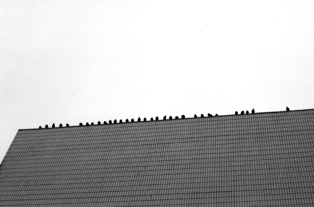 302/366 - Sinister pigeons. Which then the very idea of made me laugh - so... not so sinsister pigeons. Evidently it had already been a long day on this day by lunch time...