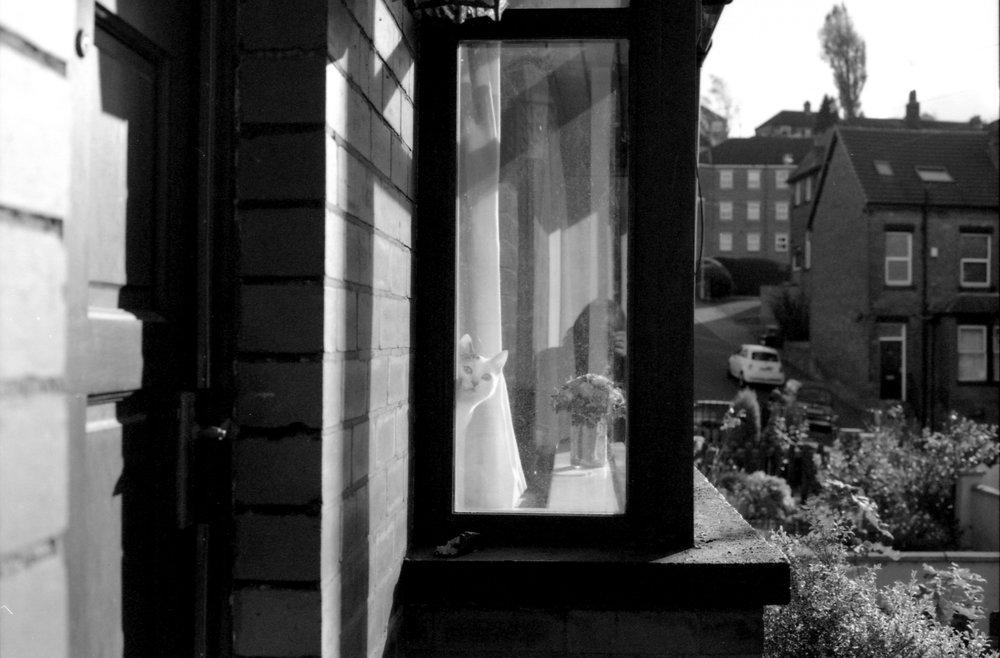 309/366 - Spot the cat next door? It cracks me up when its spying on us ha