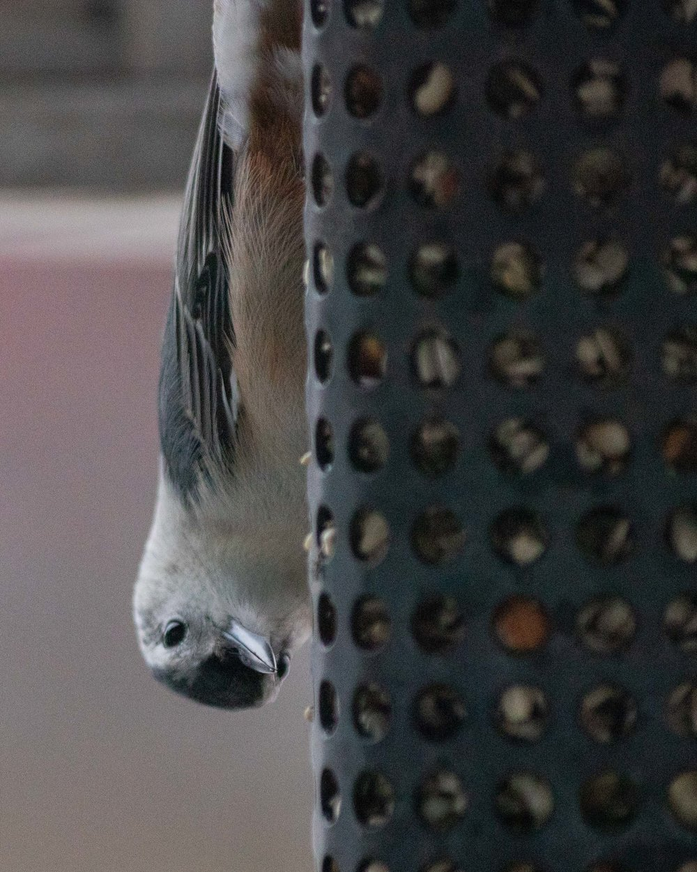 Today I learned that this is a White-breasted Nuthatch. He was hanging upside down on our feeder this afternoon.