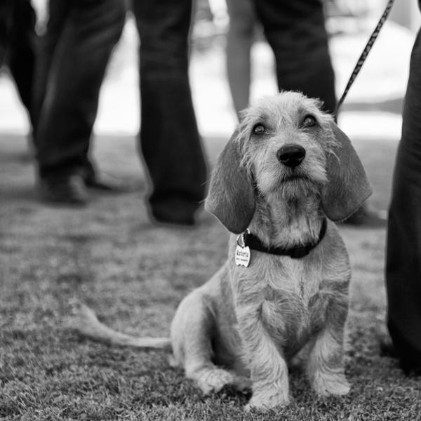 8_dogsw.jpg