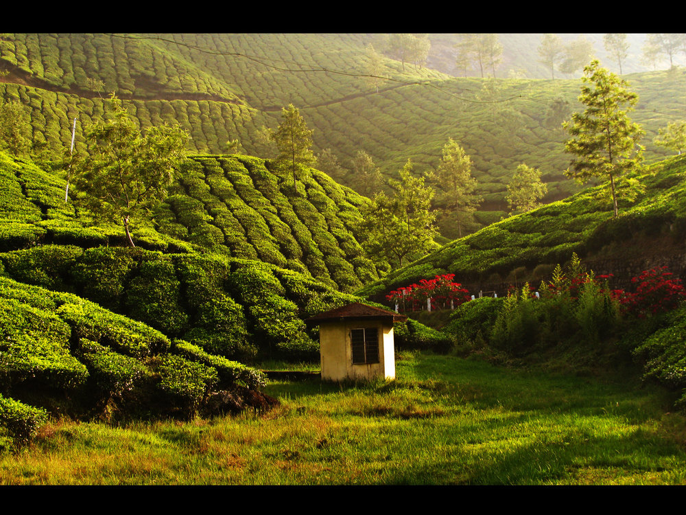 Tea estate in Munnar Photo credit:  tornado_twister