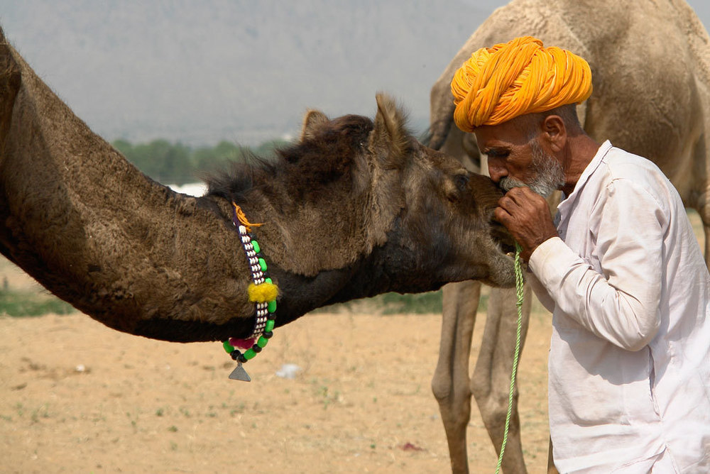 Pushkar Fair Photo credit:  Marina & Enrique