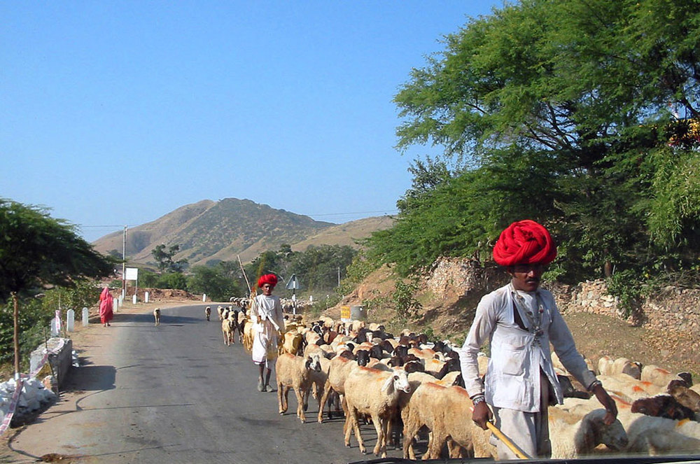 Shepherds on the drive to Mount Abu Photo credit: Prashant Prakash