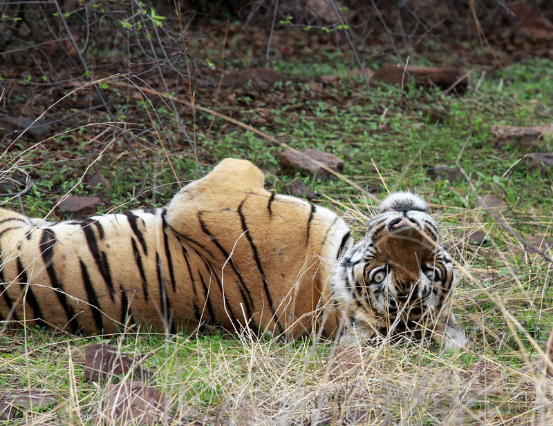 Ranthambore National Park Photo credit:  Dawn Huczek