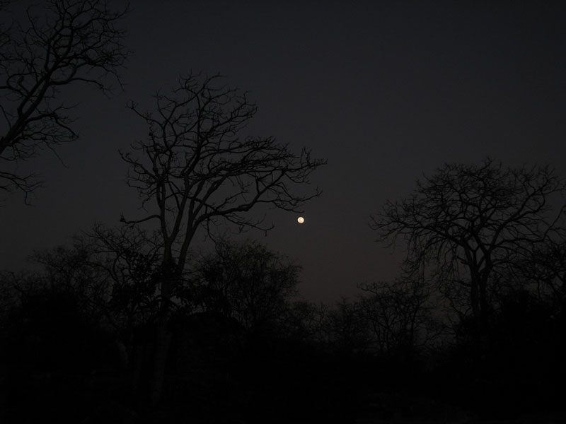 Ranthambore at night Photo credit:  Devesh Jagatram
