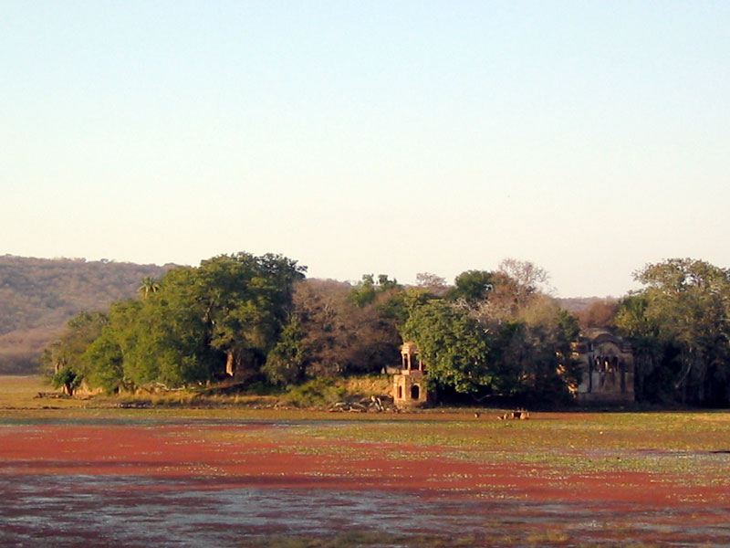 Ranthambore National Park Photo credit:  Mark Bold