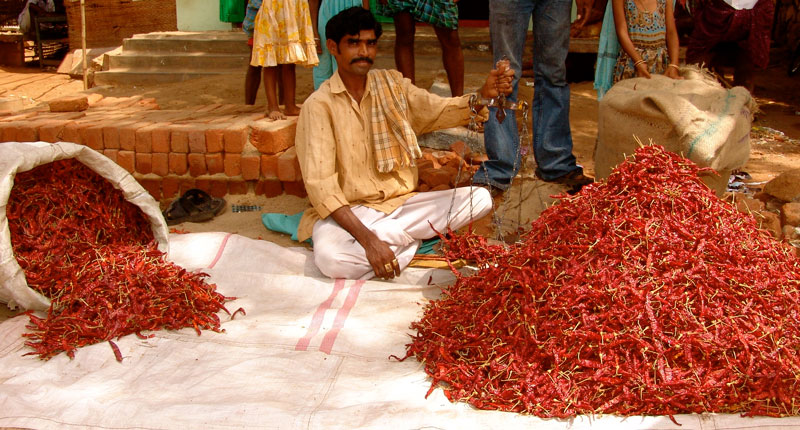 Kerala chillies