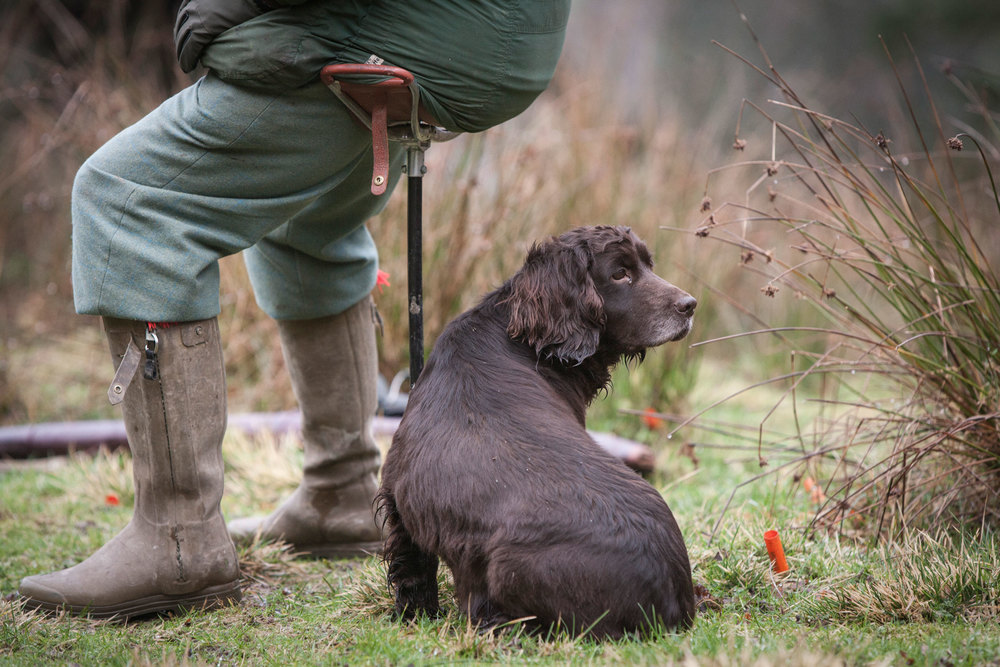 gun-dog-spaniel-web-shooting.jpg