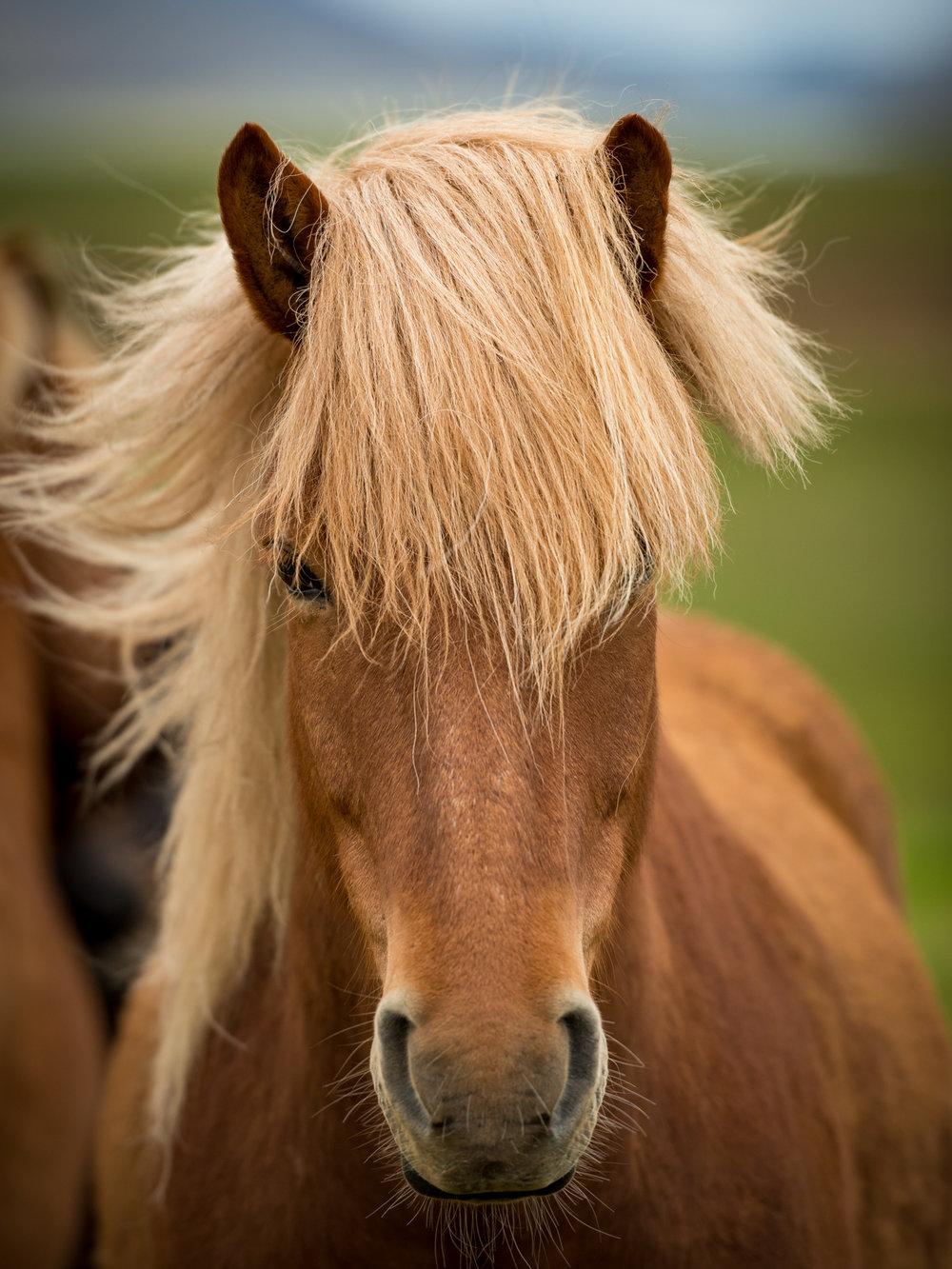 Horse_2_NoBorder.jpg