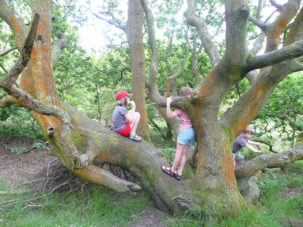 treeclimbing.JPG