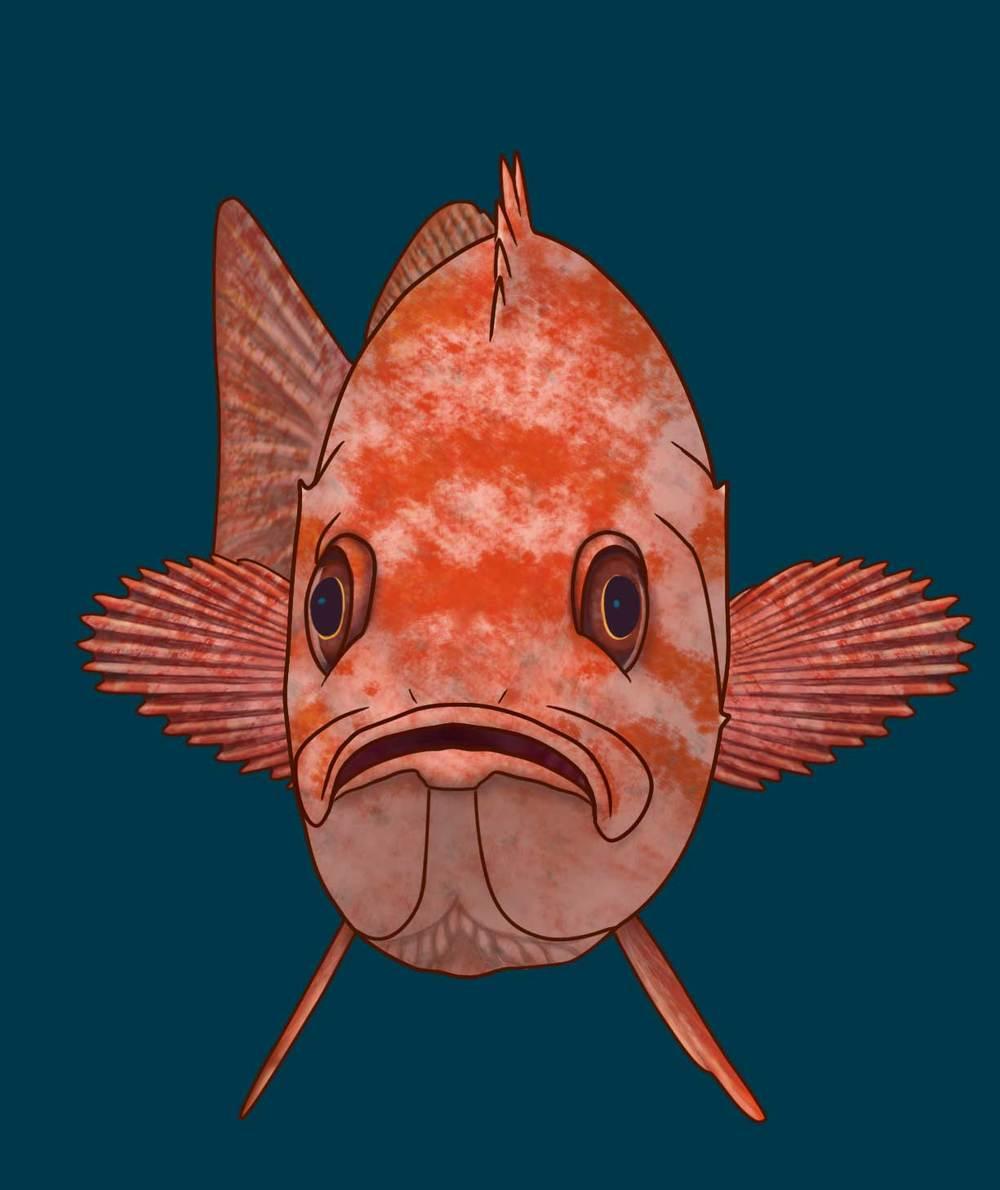 rockfishface.jpg