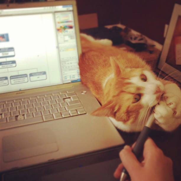 Buttons giving Liz Bradford's Wacom pen a love mauling.