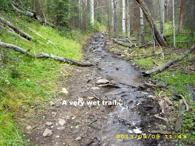 wet trail.JPG