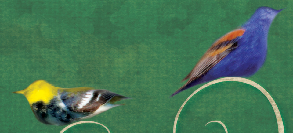Birders_detail3.jpg