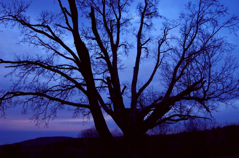Tree at Twilight
