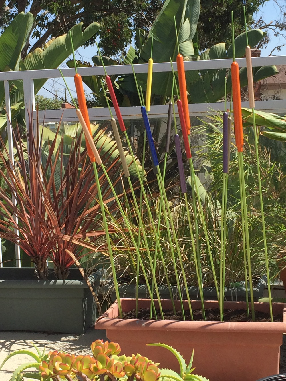 Cat tails with a twist. When the wind blows these make a soft, metallic sound, as with chimes.