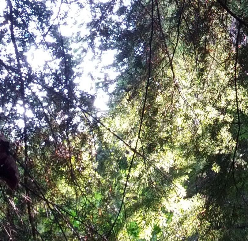 Canopy3 Crop2.jpg