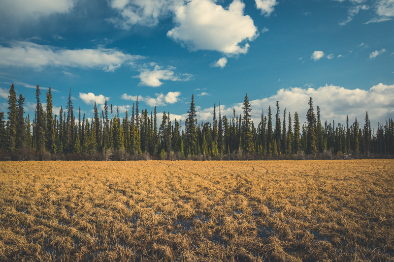 Just outside of Whitehorse, Yukon.  Canon 5DMKIII -