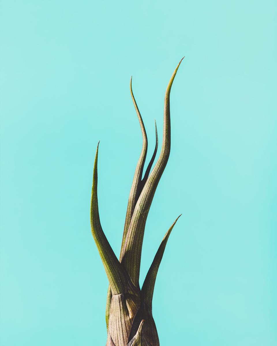 05_Botany.jpg