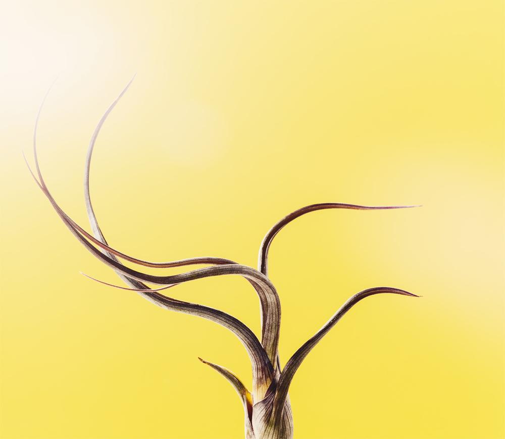 06_Botany.jpg