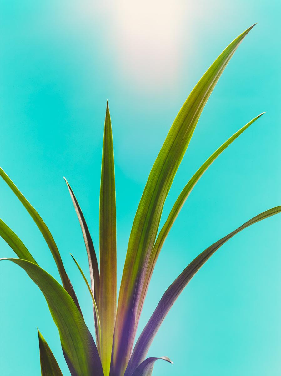 07_Botany.jpg