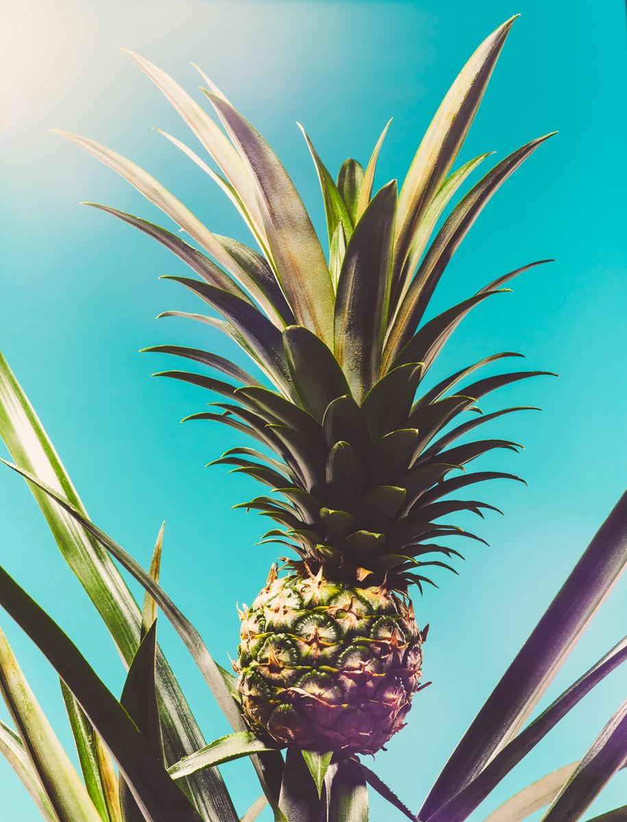 08_Botany.jpg