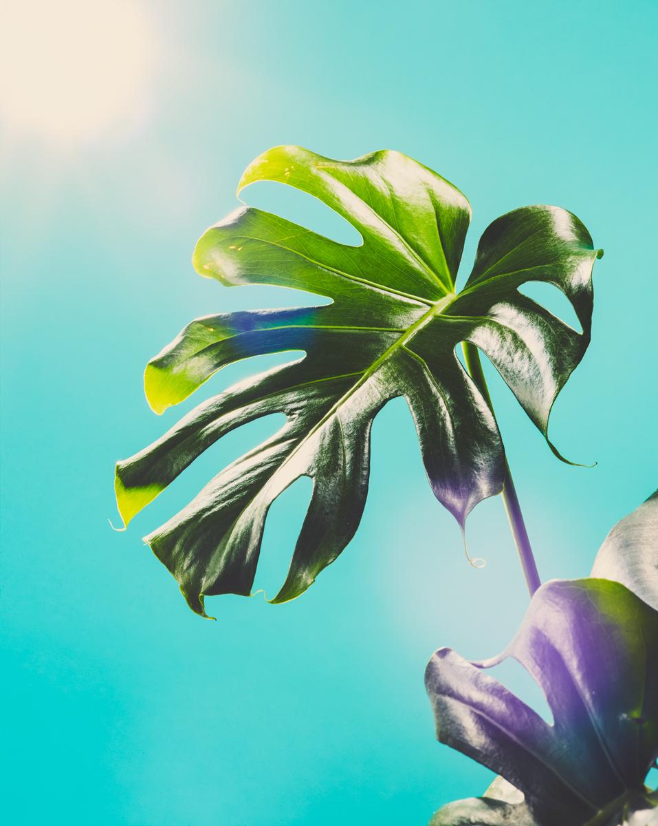 10_Botany.jpg