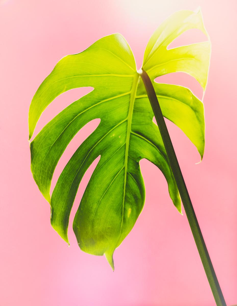 11_Botany.jpg