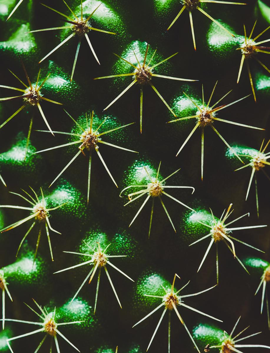 15_Botany.jpg
