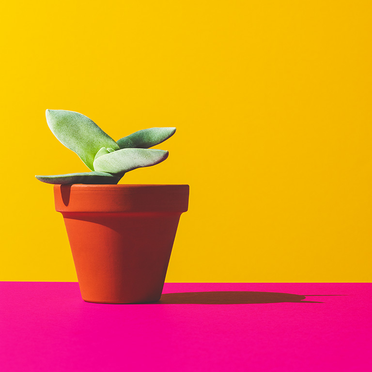 Botany2_03.jpg