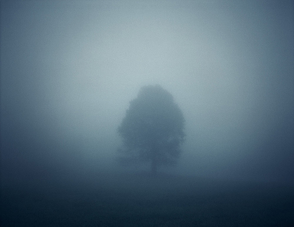 Fog Tree, Appalachian Mountains