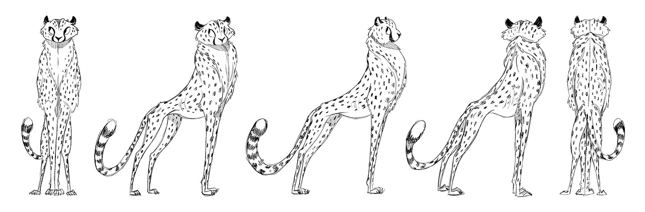 cheetah turnaround!