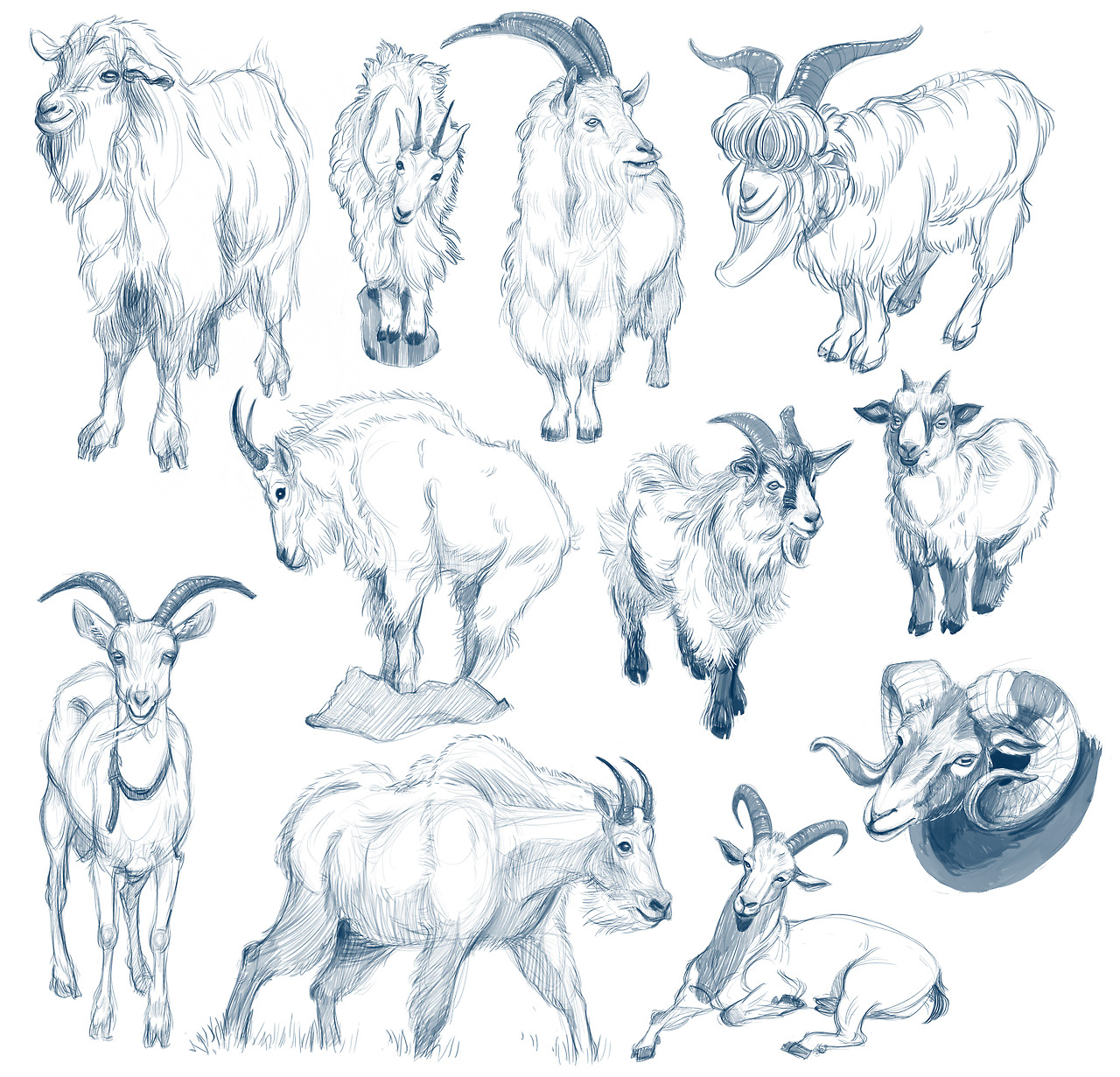 i drew muhself some goats!