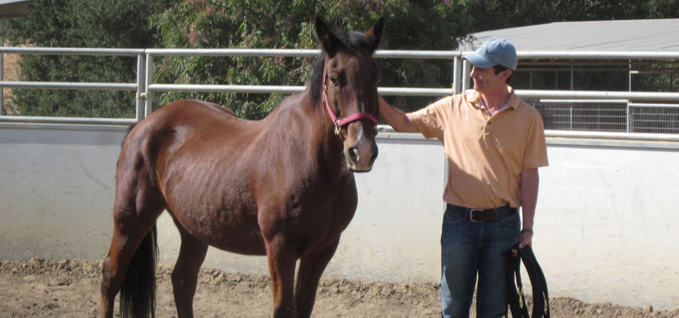 """""""My time with Lisa and the horses was, and is, life changing. I reflect on what I learnedoften, it's changed my interactions with everything. Highly recommend this experience.""""   — Jack Abbot, CEO of Oak Creek Trail, President of TEDxSanDiego"""
