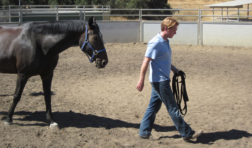 """""""I found equus training to be instrumental in illustrating several importantfacetsof good management as well as pitfalls.""""   – Scott Scott Starkey, VP and GM, aviation aerospace company"""