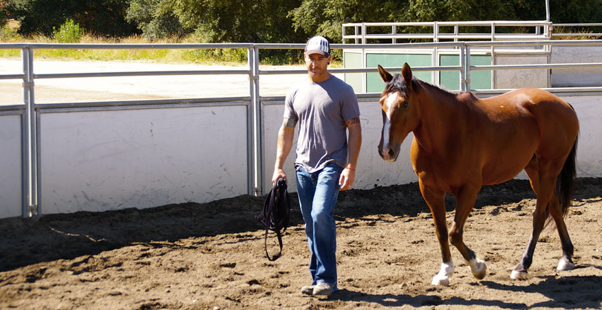 """""""Working with Lisa and the horses was such a powerful way to see myself and embody new life lessons. Lisa's skillful coaching helped me to process the interactions I had with the horses and then weave them into a metaphor for how I operate in the world.""""  – Pete Kirchmer, founder Mindfulness Based Health"""
