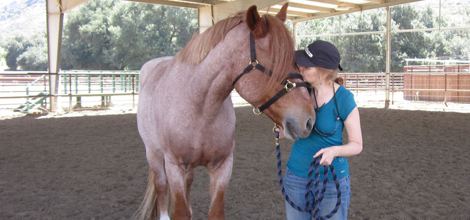 """""""There is something gravely exhilarating about being in the center of a round ring with a 1,500 pound animal who is so sensitive to your energy that you can't wear sunglasses. Working with Lisa was an unforgettable experience, as her deep intuition and quietly assertive guidance brought me a wealth of self insight.""""     – Stephanie Weaver, experience consultant, food blogger, author"""