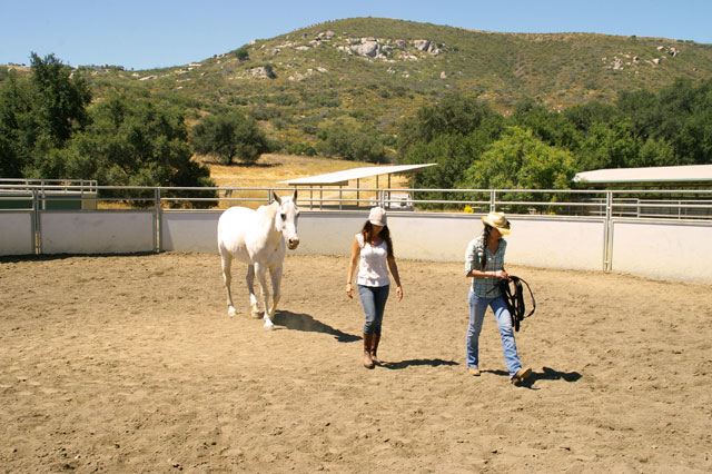 Lisa and one of her four-legged partners with a client.