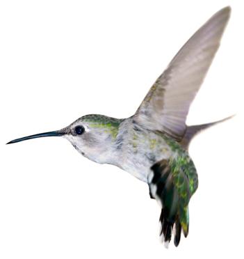 hummingbird_lisatran-coaching_500px.jpg