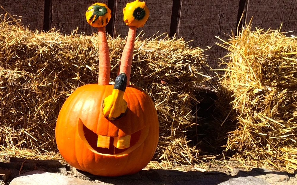 Pumpkin carving contest (our favorite)!
