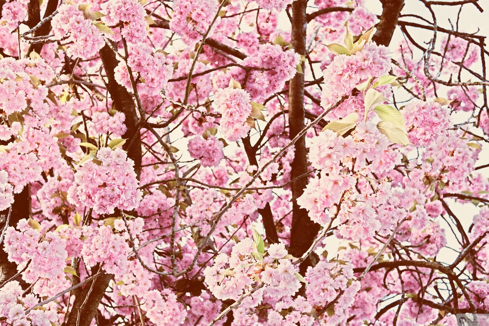 Spring arrives.jpg