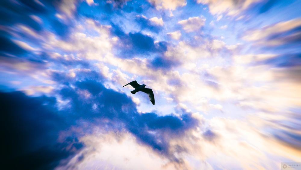 Seagull 8.jpg