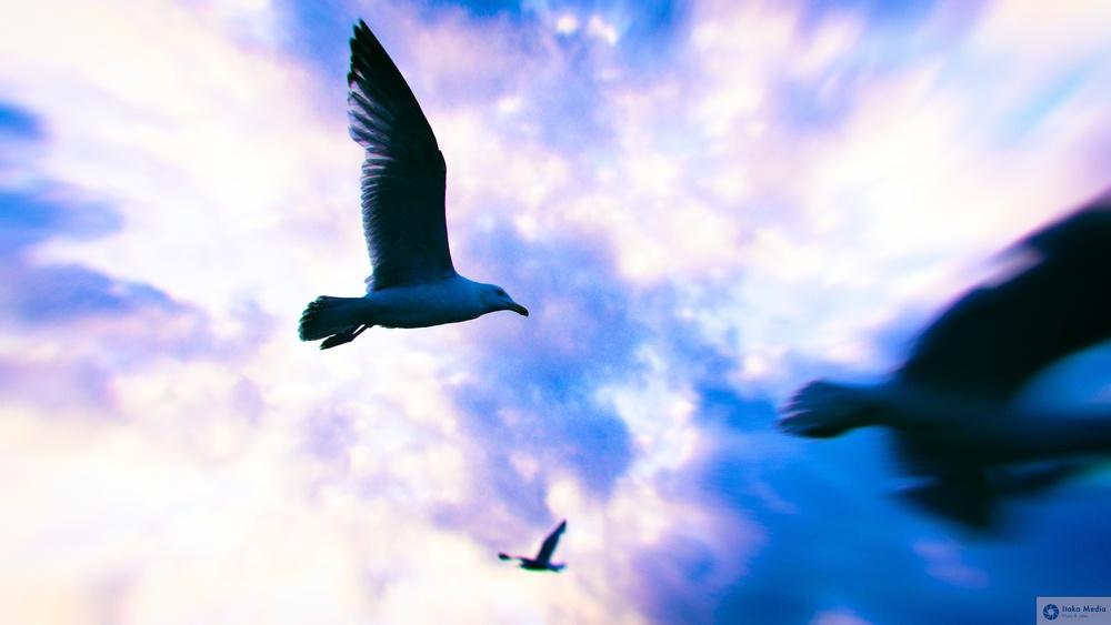 Seagull 7.jpg