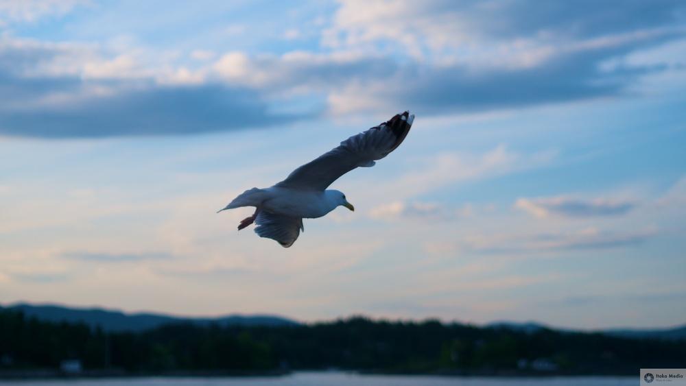Seagull 3.jpg