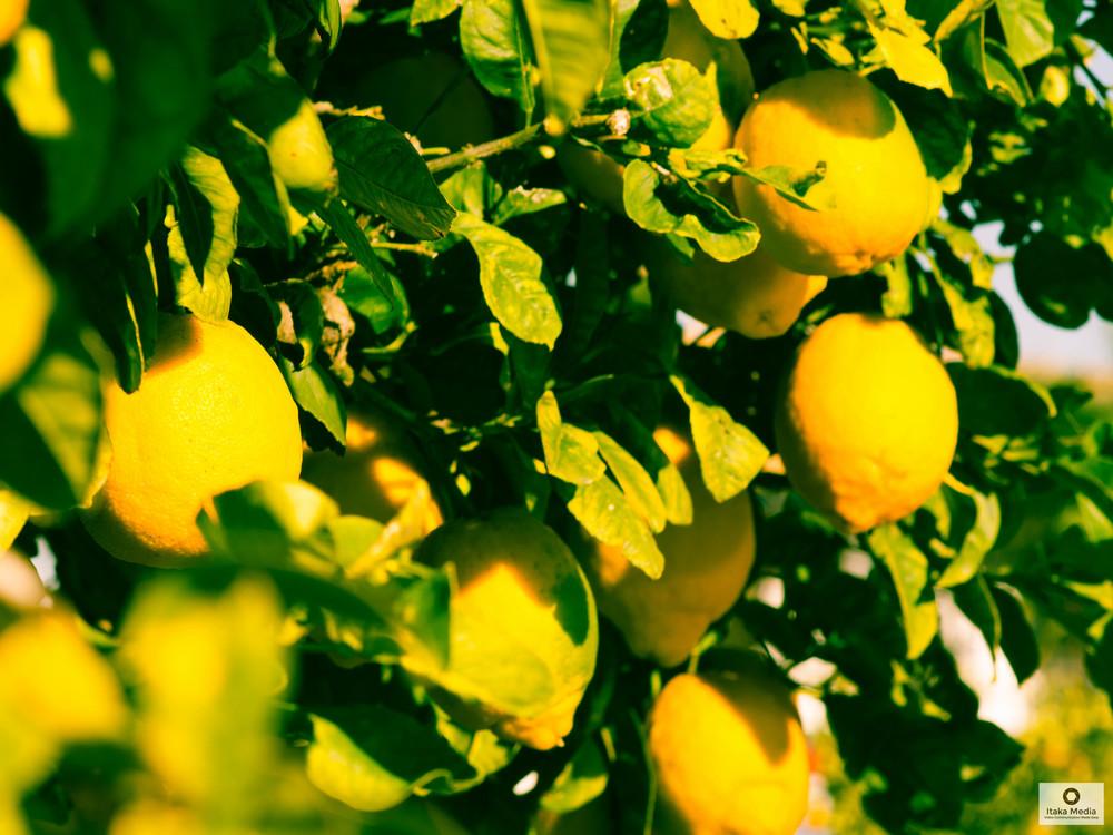 Olive trees-10.jpg