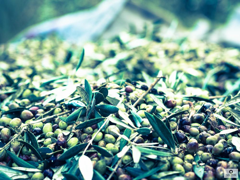 Olive trees-20.jpg