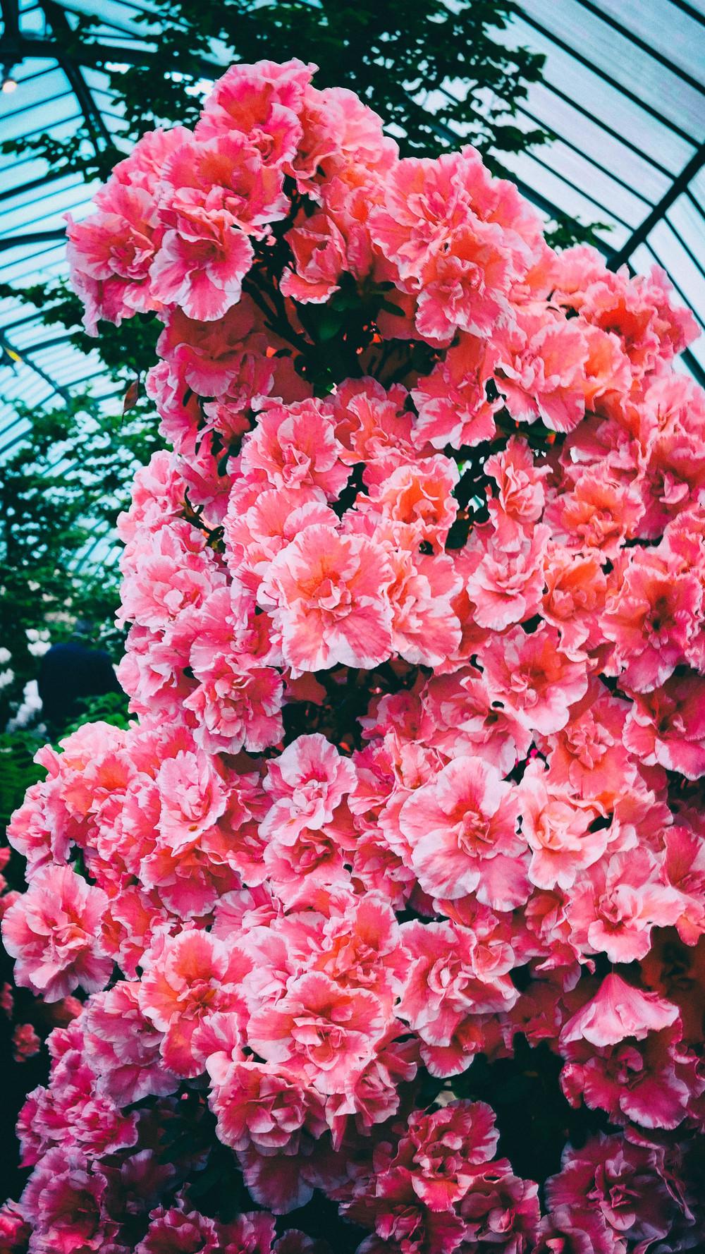 fleurs-14.jpg